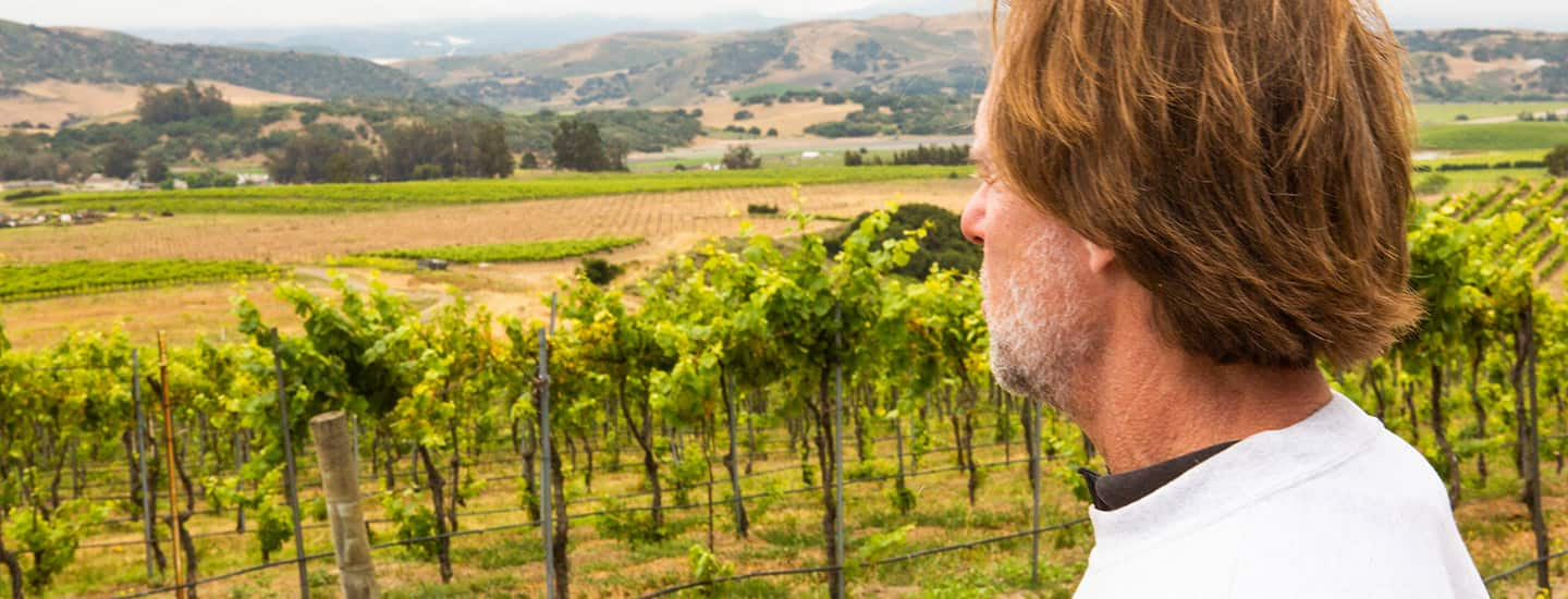 Bryan Babcock looks over a field of grapevines.
